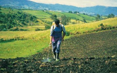 Efectos de los Agroquímicos en la Salud